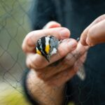 Biology Students Do Field Research on Bird Species